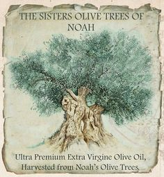 DIMA SHARIF: Olive Oil Ice Cream & The Ultra Premium EV Olive Oil Harvested From The Oldest Living Olive Trees On Earth