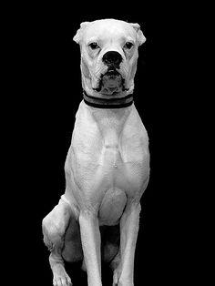FOTOS SIN PORQUE: Fotografías en Blanco y Negro.ANIMALES. . Fotografía Blanco y Negro, fotografía de animales, lobos marinos, perros, Retratos de animales