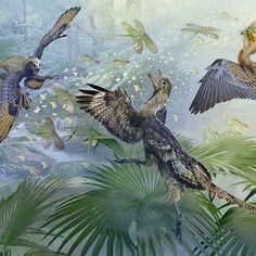 [coursera german] [University of Alberta] Paleontology: Theropod Dinosaurs and the Origin of Birds Short Courses, Free Courses, Online Courses, University Of Alberta, University Of Colorado, Teach Online, Certificate Courses, Dinosaurs, Centre