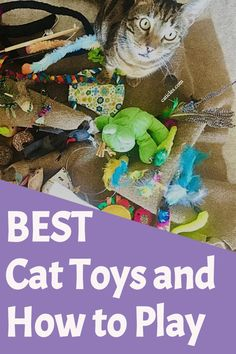 Is your cat bored? Get your cat to play with these fun toys and helpful tips! I've tested thousands of cat toys with hundreds of cats, and THESE are the best. Grab these toys and get your cat to play today! First Time Cat Owner, Indoor Cats, Pet Supplies Plus, How To Cat, Diy Cat Toys, Kitten Toys, Cat Behavior, Cat Accessories, Cat Crafts