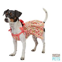 What could be sunnier than a pup in this bright Martha Stewart Pets dress – PetSmart $13.99