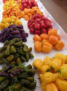 THM - Tecnologías de la Horticultura Mediterránea: Si, pero No … sobre la diversidad de los pimientos en las tiendas