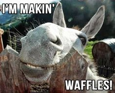 HAHAHAH picturing donkey saying it. why am i laughing so hard at this