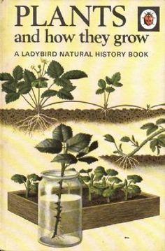 #Ladybird book/1971