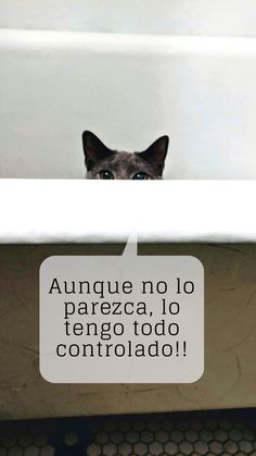 Me encantan los gatos 😂 Me puedo pasar horas observándolos.  #cat #kitty #communitymanager #socialmedia #redessociales #rrss #humor #risas #diversión #gato Social Media, Instagram, Socialism, Laughter, Cool Things, Gatos, Social Networks, Social Media Tips