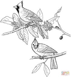 Red Cardinals coloring page | SuperColoring.com