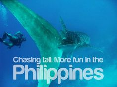 Whale shark tours, Donsol among the most well-known. Philippines Tourism, Tourism Department, Cold Treatment, Beard Lover, Fitness Gifts, Most Visited, Got Him, More Fun, Shark
