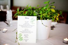 I'm warming up to the idea of a potted plant centerpiece. It would bring nature inside, plus it would be something for guests to bring home. We could just spray-paint the terracotta planters with the wedding colors and I think it would be quite pretty. Plant Centerpieces, Centrepieces, Wedding Colors, Wedding Flowers, Hollywood Glamour Wedding, Go Green, Fundraising, Wedding Reception, Dream Wedding