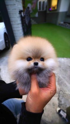 Cute Baby Puppies, Cute Animals Puppies, Baby Animals Super Cute, Cute Wild Animals, Baby Animals Pictures, Cute Animal Photos, Cute Little Animals, Cute Funny Dogs, Cute Funny Animals