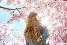 Фото Девушка под сакурой