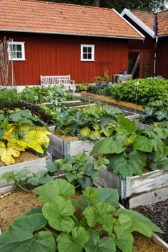 Köksträdgård med flis (och dubbla pallkragar)