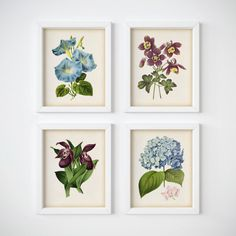 Digital download vintage flower print set of 4, Orchid print, Hydrangea print, Morning glory print, Columbine print, Home wall art, JPG