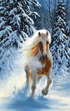 Majestic horse all the pretty horses, beautiful horses, animals beautiful, stud farm, Horses In Snow, Cute Horses, Horse Love, Wild Horses, Pretty Animals, Animals Beautiful, Cute Animals, Most Beautiful Horses, All The Pretty Horses