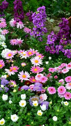 daisies and other flowers, white, pink and purple