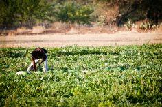 Immagine per slider #agricoltura
