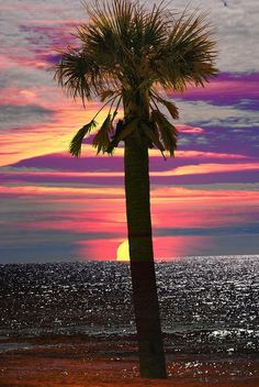 What a beautiful sunset over the ocean and palm tree! Beautiful Sunrise, Beautiful Beaches, Amazing Sunsets, Sunset Beach, Sunset Art, Pink Sunset, Summer Sunset, Belleza Natural, Belle Photo