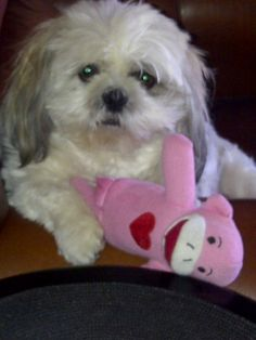 Tashi with Pinky