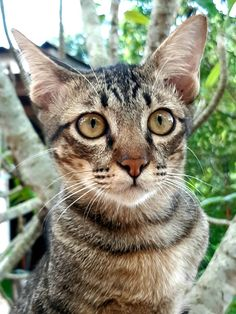 ส หมอกแมวแสนซน การถ ายภาพธรรมชาต