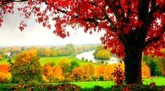 London, Richmond  Autumn in all its amazing colours at the magnificent Richmond Park …  London is Calling !