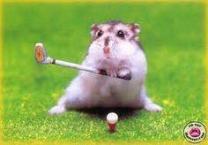 Google Image Result for http://img17.imageshack.us/img17/7049/hamster4a.jpg