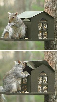 Metal Squirrel Feeder Erva Tool & Die Company,http://smile.amazon.com/dp/B003MZPQU4/ref=cm_sw_r_pi_dp_AnLxtb02K65CHXNY