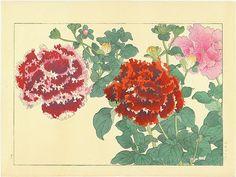 KONAN, Tanigami - Petunia