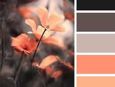 52 Super Ideas For Bedroom Pink Master Design Seeds Colour Pallette, Color Palate, Black Color Palette, Room Colors, Paint Colors, Colours, Orange Color Schemes, Color Combinations, Orange Palette