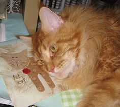 Could this cat on his quilt block BE any cuter?