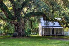 """Moses Ficklin Cottage Daufuskie Island South Carolina """"The enormous ancient live oak fronting this restored Gullah home is thought to have greeted Spanish explorers when they first came to Daufuskie Island. The classic Gullah house was constructed under its shady cool branches circa 1925. Moses Ficklin was a deacon of the First Union Morican Baptist Church and the Gullah undertaker assisted by his wife Grace. He always kept a supply of $100 caskets on hand.""""…"""