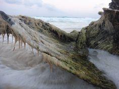 """""""Árbol del mar"""""""