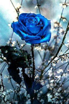 Голубая роза!