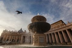 The flight... - A pigeon flies over the fountain in St Peter's square in Rome - Italy.  The last light of the day gives a delicate color and shape to the wonderful buildings and the whole feeling is tranquility ...