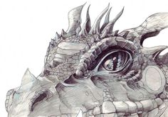 Pencil Drawings Dragon Heads Pictures