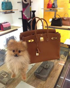 Birkin gold 35cm hermes , my puppy and I doing shopping