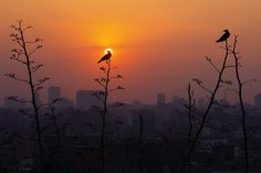 An Evening in Cairo, Egypt by Chot Touch, via Flickr