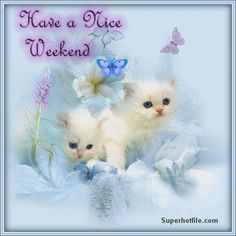 tweety saturday quotes | Happy Weekend To Everyone Pictures, Photos, and Images for Facebook ...