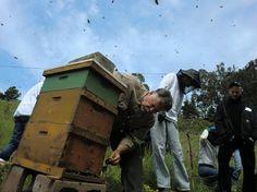 beekeeping workshop at green gulch farm.