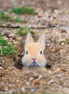 740 Creatures great and small ♡ ideas | animals beautiful, cute animals,  animals