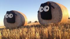 Hay bale sculpture competition