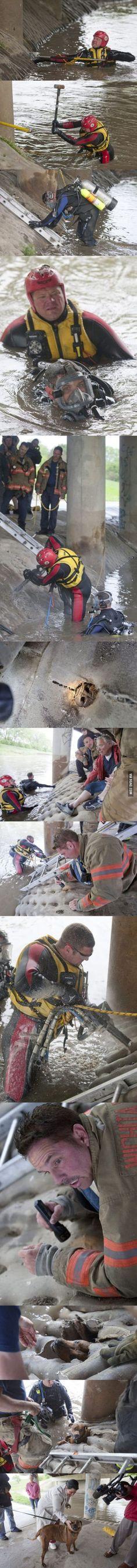 Amazing dog rescue