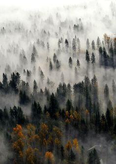 Fog Forest, The Cascades, Washington photo via matthew
