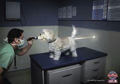 Publicité Science diet dog food