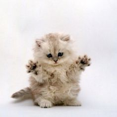 I told you I didn't do it...smell my paws no tuna here...