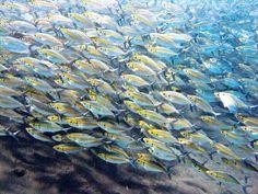 Indonesia Photography Acceda a nuestro sitio Mucho más información Scuba Diving Thailand, Koh Phangan, Snorkelling, Komodo, Koh Tao, Beach Resorts, Where To Go, National Geographic, Bali