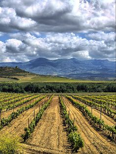 Vineyards at Haro, La Rioja - Spain