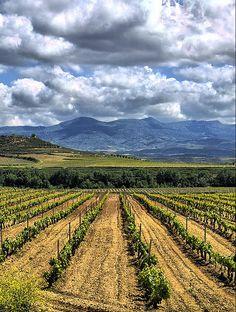 Campos de Vino en Haro, La Rioja. Este producto contribuye 5% de la agricultura en la nacion, principalmente enfocado en La Rioja y Navarre.