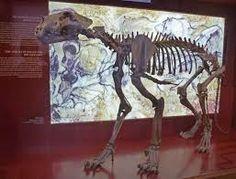 lion Skeleton pictures के लिए चित्र परिणाम