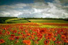 Poppy Field, North Yorkshire, England photo via arianna - poppies, poppies, poppies. Beautiful World, Beautiful Places, North Yorkshire, Yorkshire England, England Uk, Oh The Places You'll Go, Beautiful Landscapes, Wild Flowers, Destinations