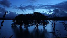 Whitianga Trees by Luke Frater on 500px