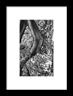 Putting Down Roots Framed Print By Elva Robinson